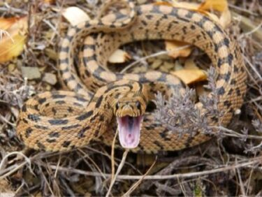 how do snakes communicate with each other?