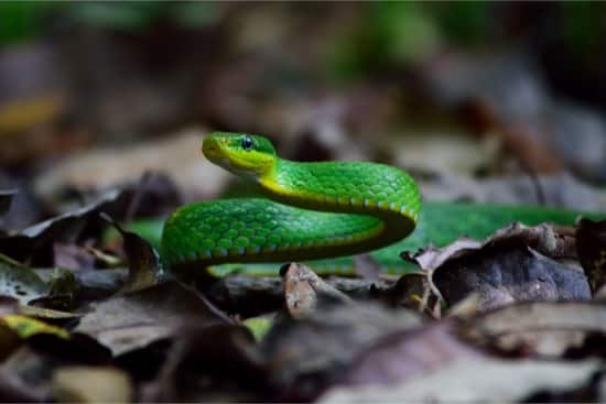how fast can a green mamba kill you?