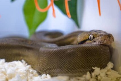 how to help a dehydrated snake