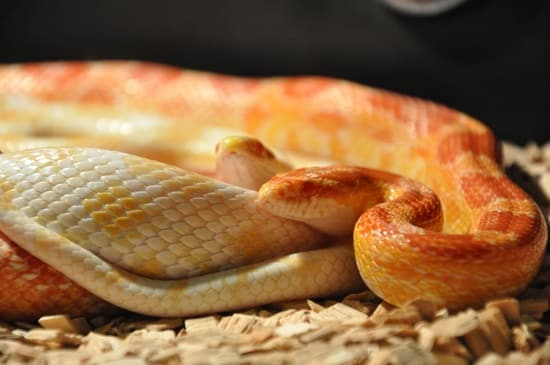 snake constipation treatment