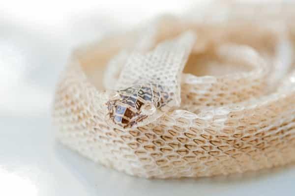 snake retained eye cap treatment