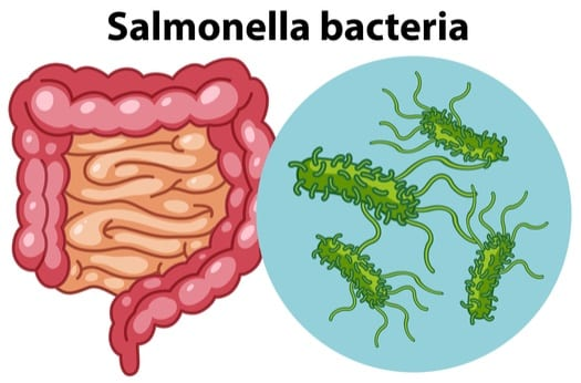 what causes salmonella in reptiles?