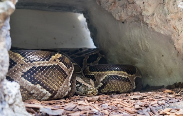 septicemia in snakes causes