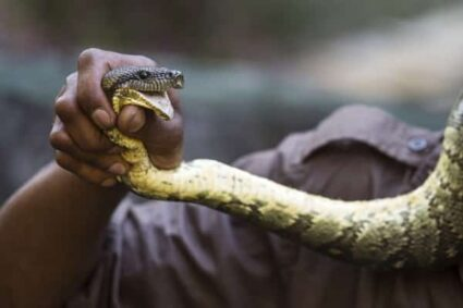 what causes the fear of snakes?