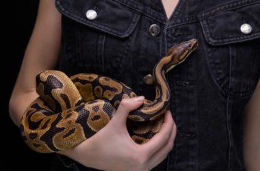 ball python health check