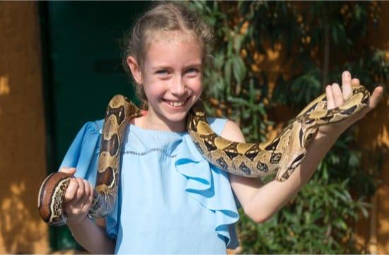 can you teach a snake tricks?