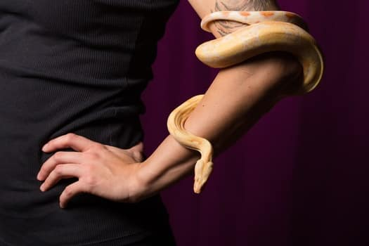 is it possible to train a snake?