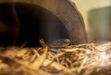 baby garter snake tank setup