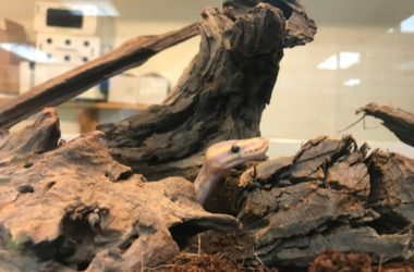 best snake hides