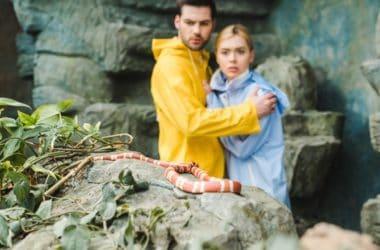 taking snakes outside
