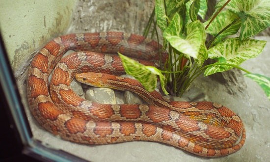Do you need a reptile Licence for a snake?