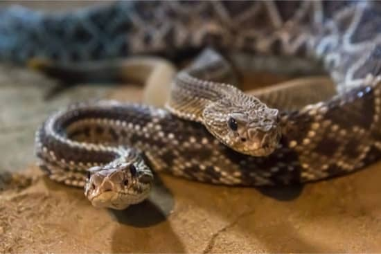 Is it legal to own a venomous snake?