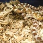 good corn snake bedding