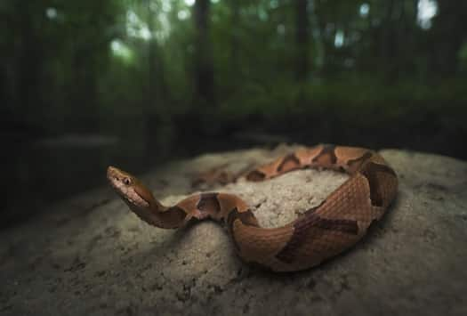 venomous snake laws by state