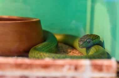 what temperature is too cold for snakes?