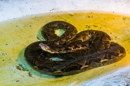 Can Snakes Have Seizures?