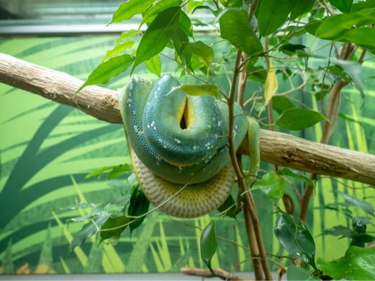 how does a green tree python protect itself?