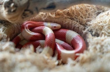 best Snake Humidifier