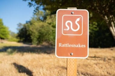 where do rattlesnakes live?