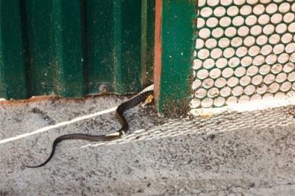 where do snakes live in your yard?