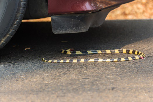 how to keep snakes out of car
