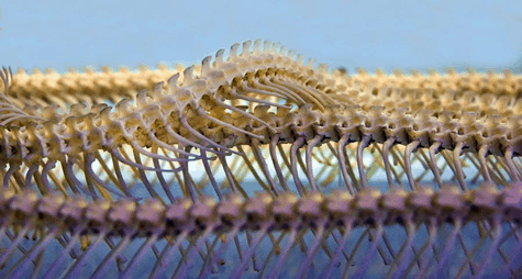 snakes backbone