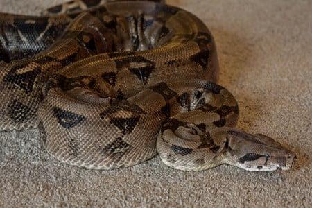 snake skin problems