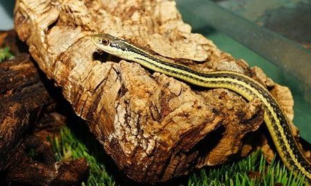 garter snake bedding